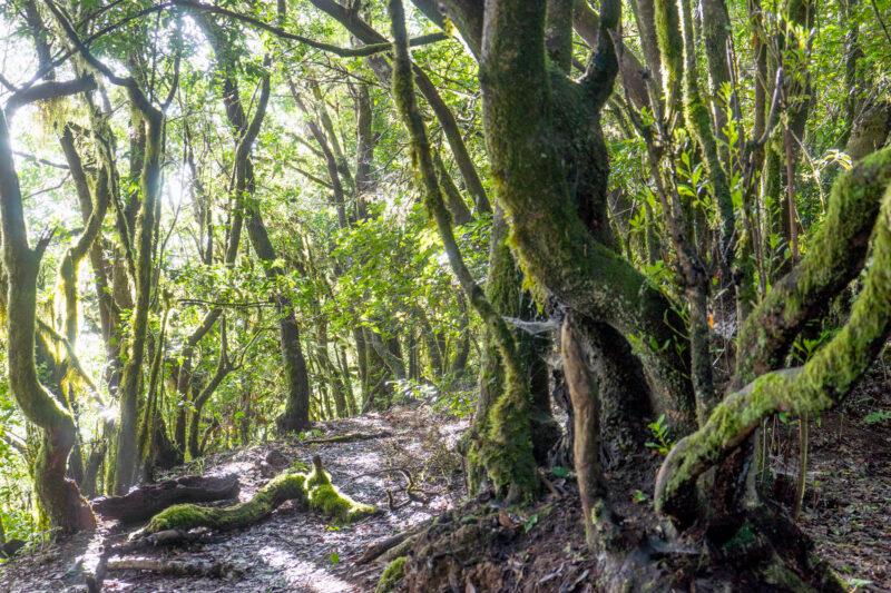 Read more about the article La Gomera Wanderung #4: El Cedro