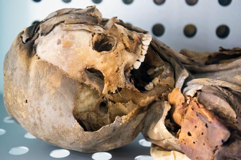 Read more about the article Das Museum für Naturwissenschaften und Archäologie – Santa Cruz Teneriffa
